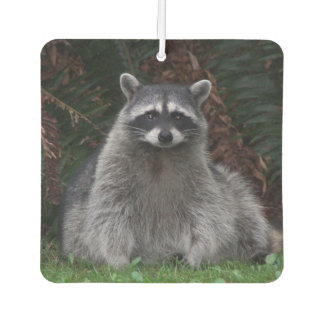 Forest Racoon Photo Car Air Freshener
