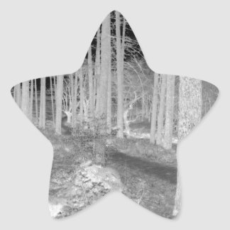 Forests of Ardentiny Star Sticker