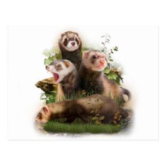 Four Ferrets in Their Wild Habitat Postcard
