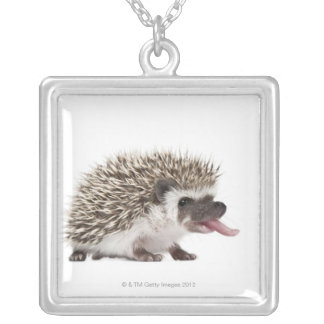 Four-toed Hedgehog - Atelerix albiventris Silver Plated Necklace