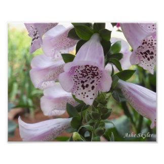 Foxglove Flower Photo Art