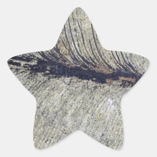 Fragile Fossil Plant Leaf Star Sticker