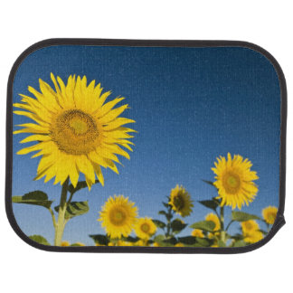 France, Provence, Valensole. Sunflowers stand Car Mat