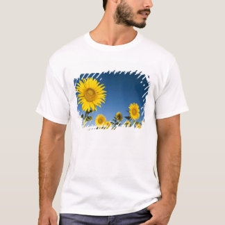 France, Provence, Valensole. Sunflowers stand T-Shirt