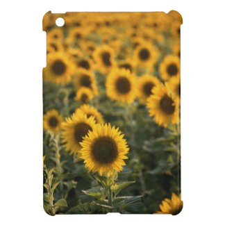 France, Vaucluse, sunflowers field iPad Mini Cases