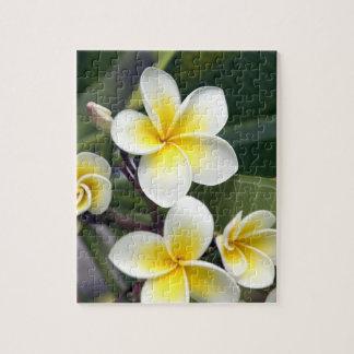 Frangipani flower Cook Islands Jigsaw Puzzle