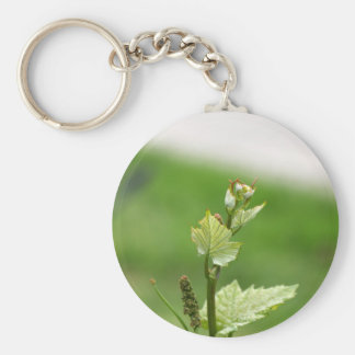 Fresh sprouts of grape vine key ring