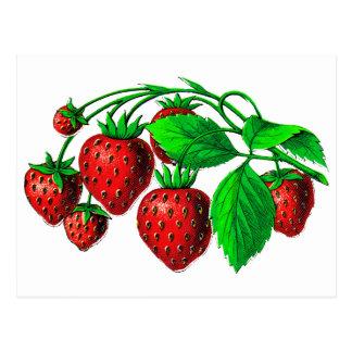 Fresh Strawberries Postcard