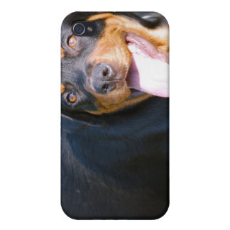 Friendly Rottie iPhone Case iPhone 4/4S Case