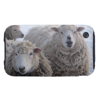 Friendly Sheep Tough iPhone 3 Covers