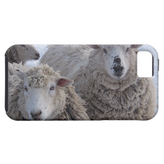 Friendly Sheep iPhone 5 Covers
