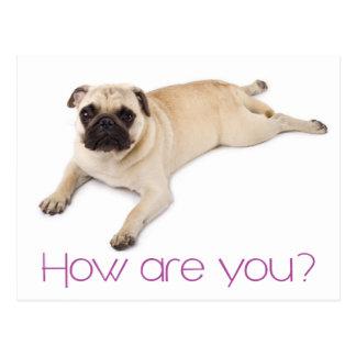 Friendship Hello Pug Puppy Dog Greeting Postcard