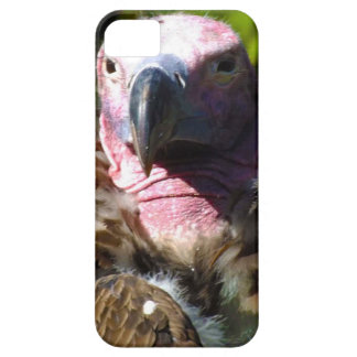 Front Facing Turkey Vulture Closeup iPhone 5 Case