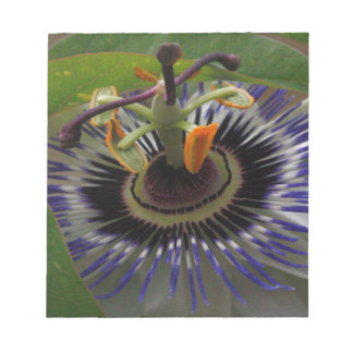 Front View of Beautiful Passiflora Flower Notepad