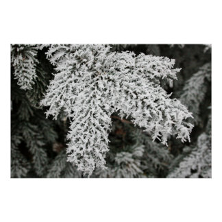 Frost on Tree Poster