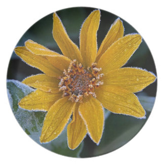 Frosted Sunflower Decorative Dinner Plate
