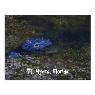 Ft. Myers Alligator Postcard