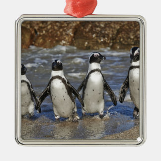 funny African Penguins, Cape Town Christmas Ornament