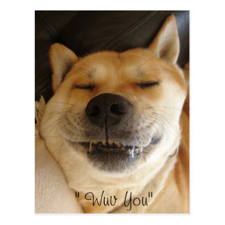 funny akita japanese type with cute smile love postcard