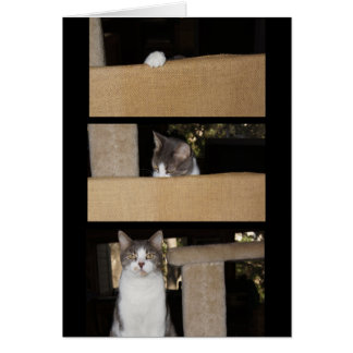 Funny Cat Admirer Greeting Card