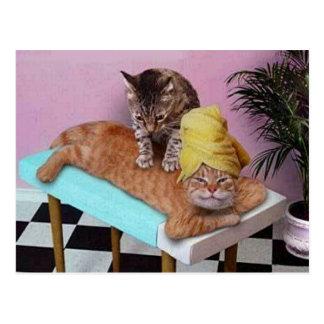 Funny Cat Massage Postcard