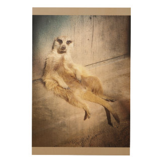 Funny Meerkat Sitting with Back to Wall, Grunge Wood Wall Art