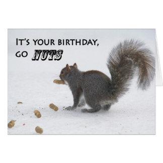 Funny squirrel birthday greeting card