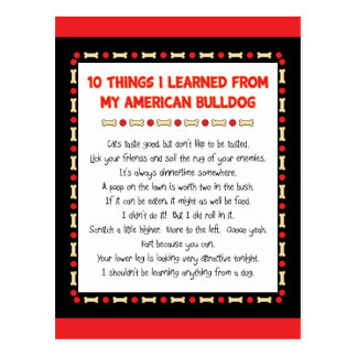 Funny Things I Learned From My American Bulldog Postcard