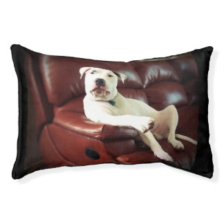 funny white pitbull on couch pet bed