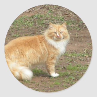 Furry Orange and White Cat Round Stickers