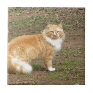 Furry Orange and White Cat Tile
