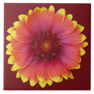 Gaillardia 1 large square tile