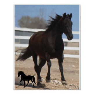 Gaited Horse Poster