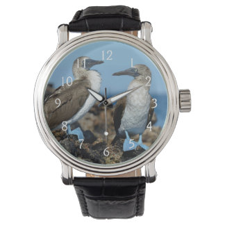 Galapagos Islands, Isabela Island Wristwatches