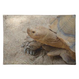 galapagos tortoise reptile animal placemat