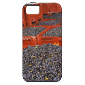 Gamay grapes just in from the harvest at the iPhone 5 cases