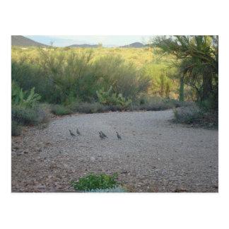 Gamble Quail in the Sonoran Desert Postcard