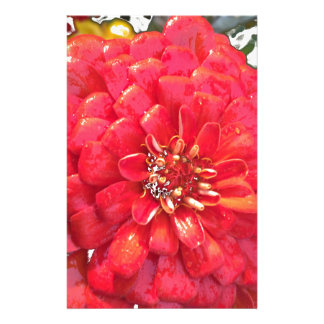 Garden Blooms - Red Stationery