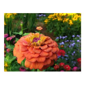 Garden Colors Postcard