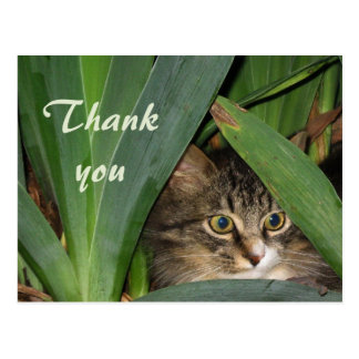 Garden Kitty Postcard