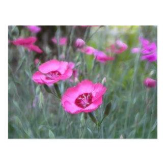Garden Scenes - Cottage Pinks Post Card