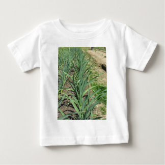 Garlic plants in rows in the garden baby T-Shirt