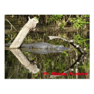 Gator in the Lake Postcard