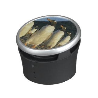Gentoo Penguins, Pygoscelis papua), sunset, Bluetooth Speaker