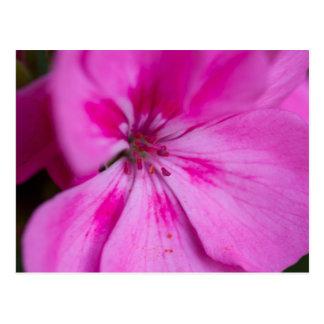 geranium in the garden postcard