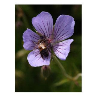 Geranium with Bee Postcard