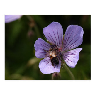 Geranium with Bee Postcard