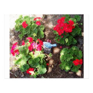 Geraniums and Bird Postcard