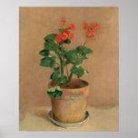 Geraniums in a Pot, c.1905 (oil on canvas) Print