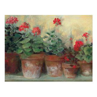 Geraniums in Pots Postcard